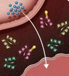 Alogliptin Diabetic Mechanism of Action
