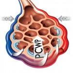 Alveoli Cross Section