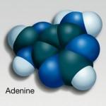Illustration of Nucleotides