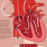 How Blood Flows-Through the Heart